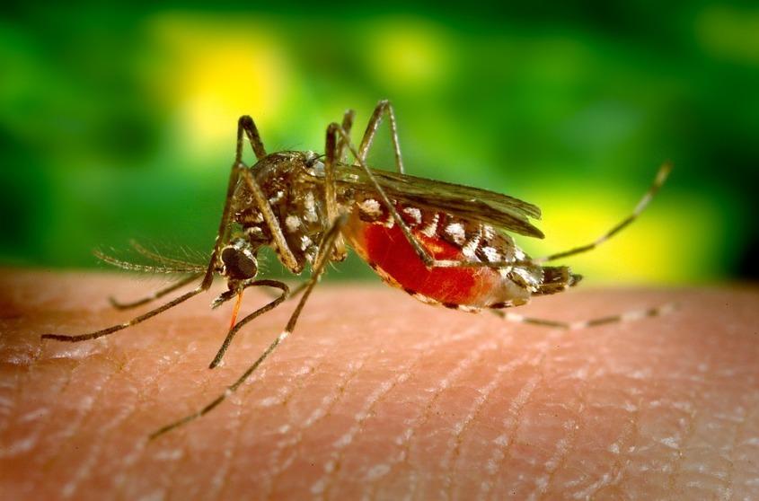 mosquito-542156_960_720